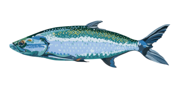 Sticker_Tarpon