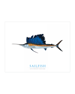 Game Fish Note Card Stationery